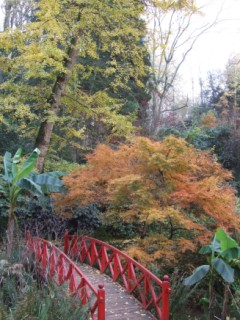 A fine collection of acers