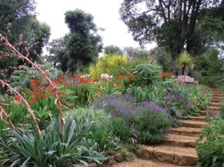 The Mediterranean Bank has been one of many successes in the restoration programme at Abbotsbury Subtropical Garden