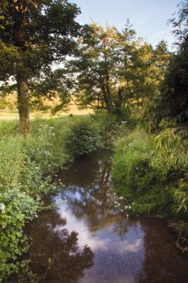The stream at Lower Wraxall.