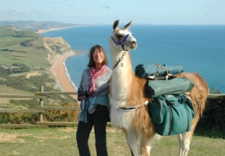 This llama seems to be enjoying the spectacular scenery of the Dorset coast as much as his human companion.