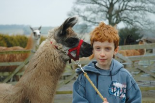 Llamas love human beings, particularly the elderly and the young.