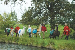 Leading laden llamas by the lake. The water feature at New House Farm was a Millennium Project.