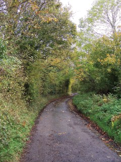 the halter path from Stalbridge to Sturminster Newton