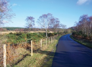 The road from Wareham to Arne