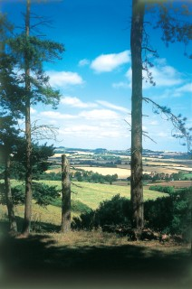 Pentridge Knoll-the countryside of Cornelius Kerley