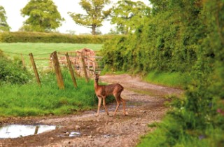 A walking companion on the edge of the woods near Whitfield Farm