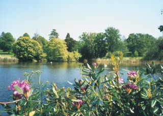 The parkland and lake near Forde Abbey