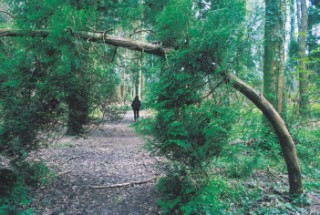 Thorncombe Wood