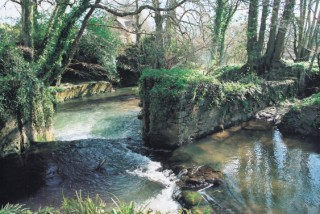 The River Brit,netherbury