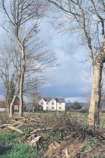 Hedge-laying at Hingsdon,netherbury