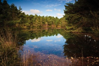 A heathland pond, Purbeck Heath