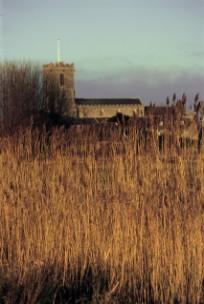 Low winter sun on the reeds alongside South Causeway, Wareham,