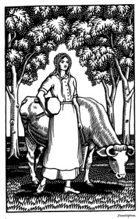 Tess preparing to milk in the field