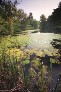 Collyer's Brook