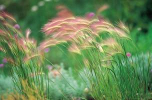 Grasses, Buckland Newton