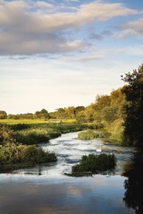 on the Frome beyond Lewell Mill Farm, Hardy Country