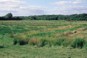 Old water meadows near Wool,The River Frome