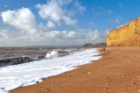 The beach at Burton Bradstock is not only a significant geological feature – its mixture of hard and soft Bridport sands give the cliffs a serrated look –  but was also the place where, according to folklore a mermaid was brought to land in 1757; probably it was an off-course dugong. Less exotic landings were made there by Dorset smuggler par excellence, Isaac Gulliver, who even planted a stand of conifers as a landmark for his smuggling fleet.