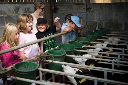 School children observing calf feeding at Gore Farm, one of many elements of the life of a farm that visitors can choose to see