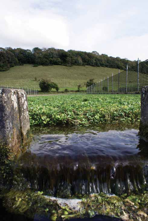 Sydling is an attractive village with clear running streams where watercress is still grown