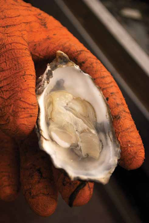 A freshly-shucked oyster, flipped it over in its own juice and ready to eat