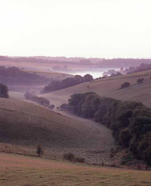 The Chase, Cranborne Chase, is the scene of the first tragedy in Tess's odyssey, where she minds herself at the mercy of Alec D'Urberville. 'Darkness and silence ruled everywhere around… and about them stole the hopping rabbits and hares.'