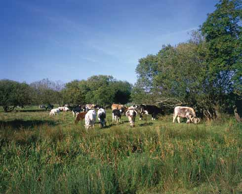 Hardy's Vale of the great dairies, the Frome valley, where 'the world was drawn to greater patterns,… enclosures numbered fifty acres instead of ten, the farmsteads were more extended, the groups of cattle formed tribes hereabout.'