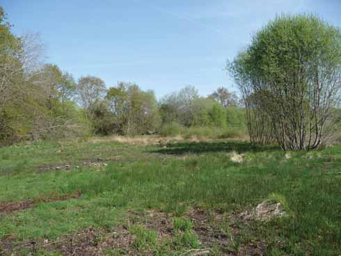 After years of little management the meadow was overgrown with scrub