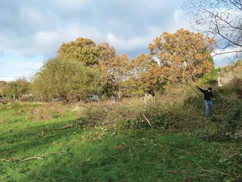 Volunteers and DWT staff expended a good deal of energy clearing the scrub to allow the meadow to grow again