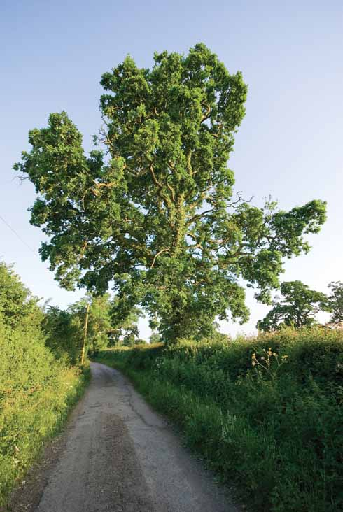 The final section of the walk combines quiet lanes and footpaths