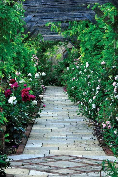 Roses and wisteria beneath the pergola