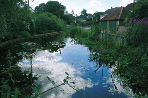 The Millennium Pond at Winterborne Houghton