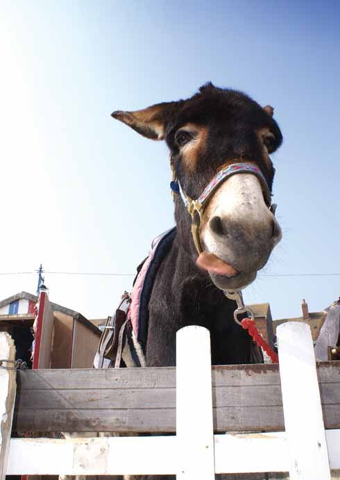 Sooty, the award-winning donkey, pulls one of her party pieces
