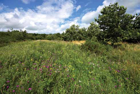 A view of one of the main rides showing the rich sward of grasses and wild flowers in mid summer