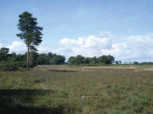The Holt Heath National Nature reserve (NNR) covers an area of 488 Ha (1205 acres)