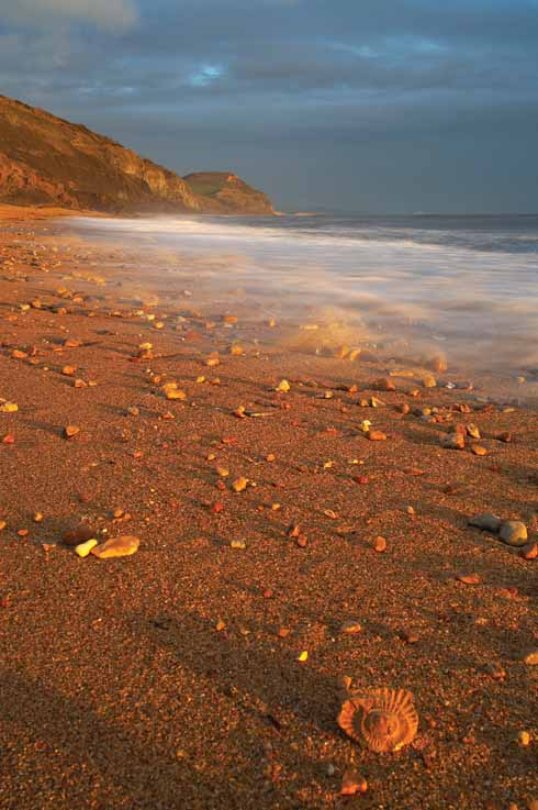 Raking evening light on a fossil on the beach at Charmouth with Golden Cap beyond