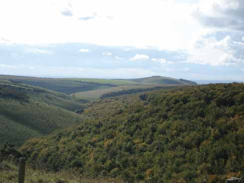 Chalk downland, Melbury Bottom and Melbury Hill
