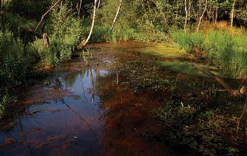 Kingfisher Creek