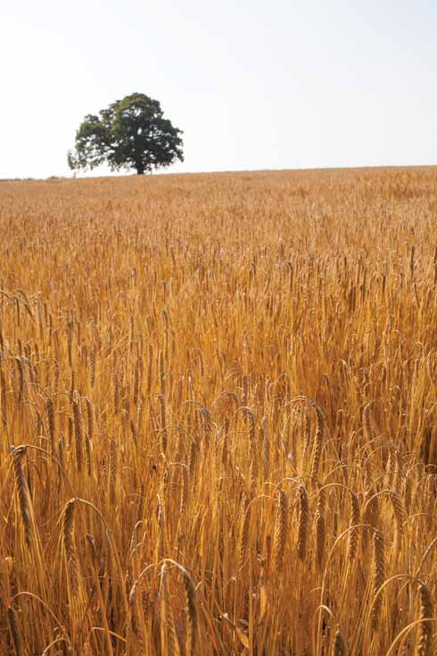 During the summer months, the arable land is at its most attractive