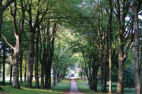 A shady avenue leading to Cranborne Manor