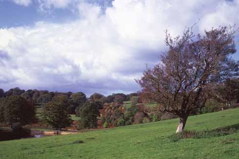 Melbury Park is the grounds of Melbury House, the model for 'King's Hintock Court' near East Chelborough (Hardy's 'Delborough')