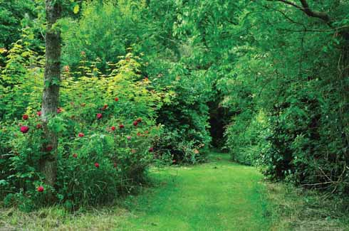 One of the paths leading away from the South Plot
