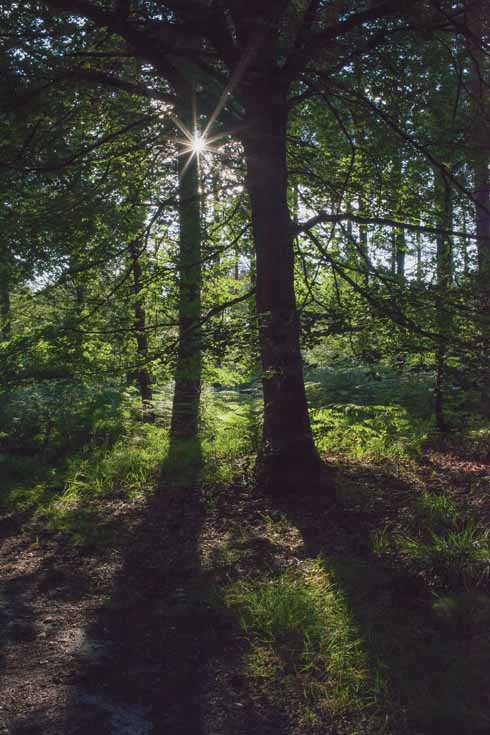 On warmer days, the wooded section offers some much-wanted shade