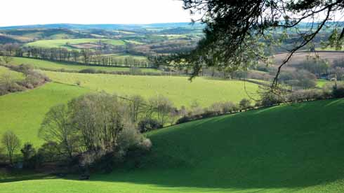 The area west of Beaminster has some of the county's best walking