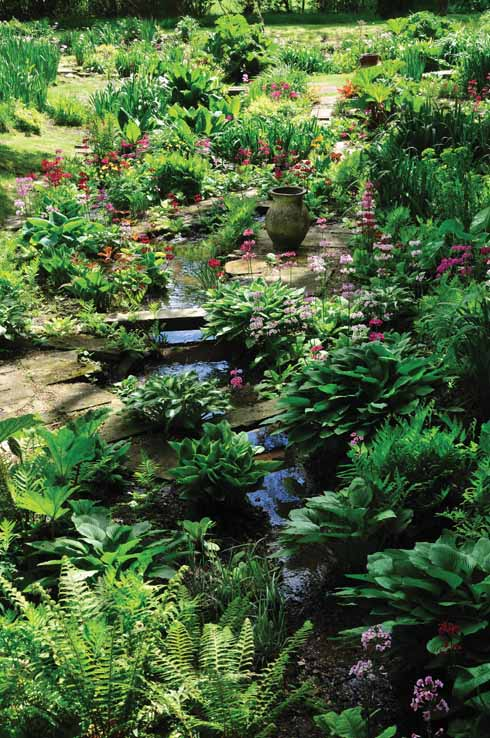 ❱ The bog garden has a network of bridges crossing the little streams and joining all the island beds