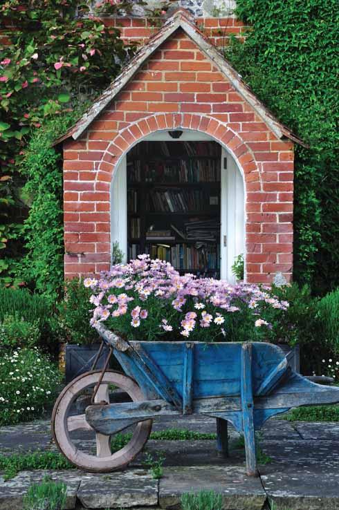 A garden wheelbarrow full of marguerite daisies