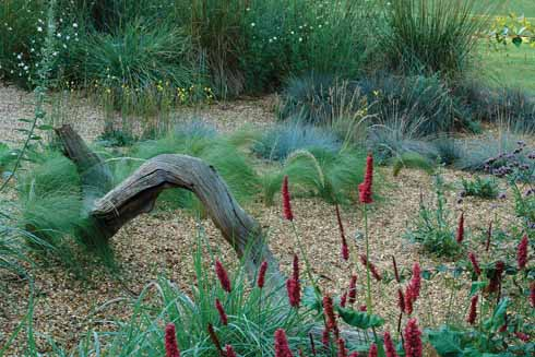 Coloured grasses for architectural interest