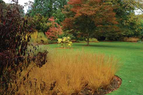 Open spaces with grasses