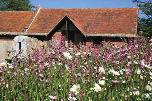 ❱ Wildflower meadow in the rickyard, Tyneham Farm, June 2013