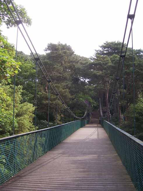 The suspension bridge over Alum Chine on which the young Winston Churchill nearly killed himself. Note the supposedly health-giving pine trees.